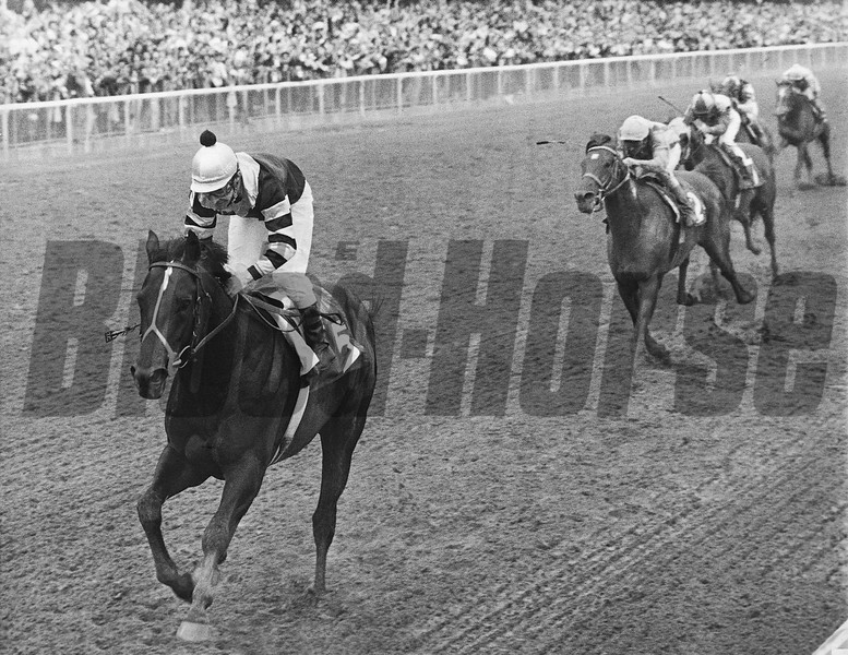 Seattle Slew wins the 1977 Belmont Stakes<br /> Photo by: Bob Coglianese