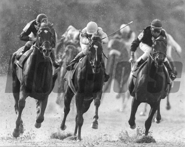 Easy Goer defeats Sunday Silence in the 1989 Belmont Stakes<br /> Photo by: Bob Coglianese