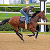 Big Brown gallops for the first time at Churchill.<br /> Horse scenes, Derby and Oaks contenders, at Churchill Downs in Louisville, Ky. on April 29, 2008.<br /> Photo by Anne M. Eberhardt