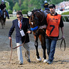 Photo by Skip Dickstein  - Lookin At Lucky on the way to the paddock for the Preakness May 15, 2010.