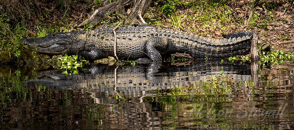 Florida Guided Photography Trips