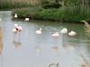 Sleeping flamingos?
