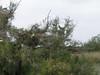 Another bird tree