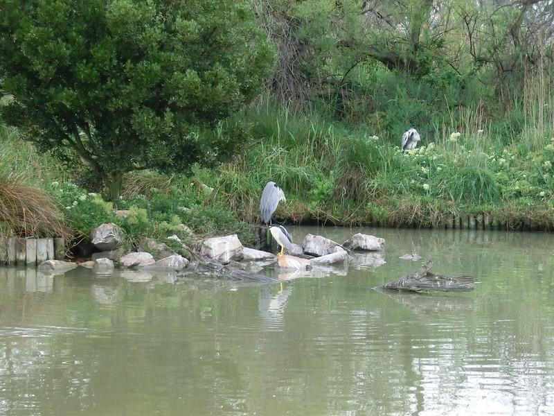 Camargue -  Parc Ornithologique