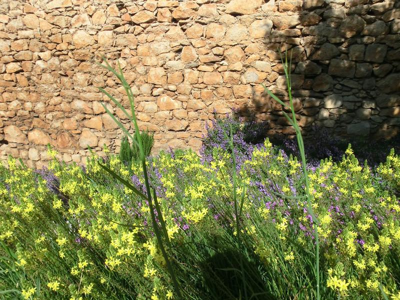 Flowers in John Lennon garden