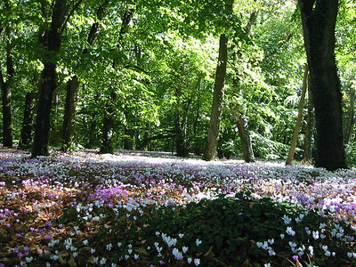 More flowers in the woods