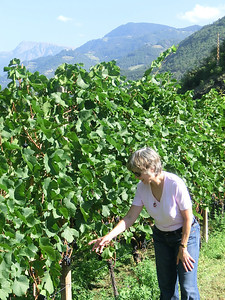 Linda checking out the grapes