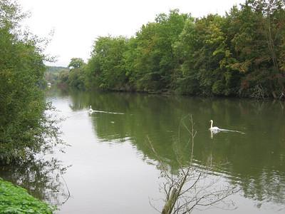 Swans at Moulin de Connelles