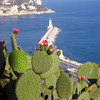Cacti and Port