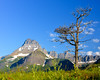 DeadTreeonHilltop-G-MGH_DSC2107 MR Glacier NP 2013