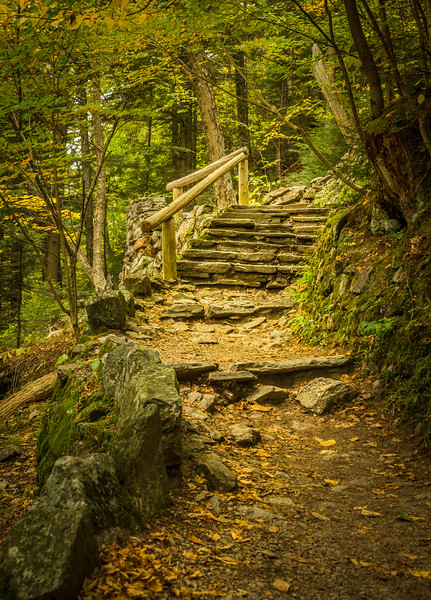 Trail to the Enchanted Forest