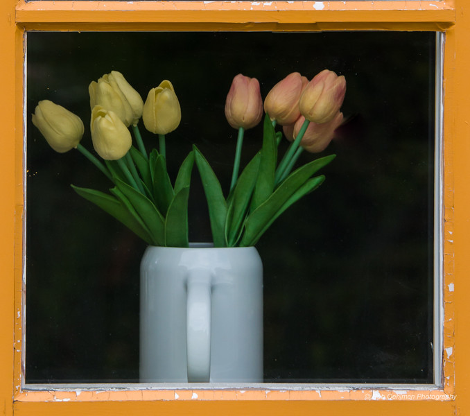 Framed Within a Window Frame