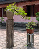 Bonsai at the Imperial Citadel and Forbidden Purple City