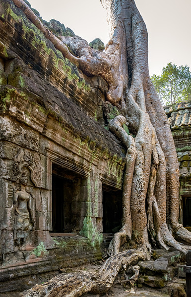 Ta Prohm Temple - Known for its overgrown trees