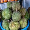 Durian (Tu-Rian) sold in the  marketplace