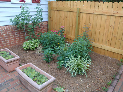 Mom's patio garden with plants from Lisa'