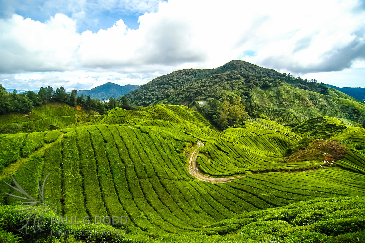 Cameron Highlands, Pahang, Malaysia
