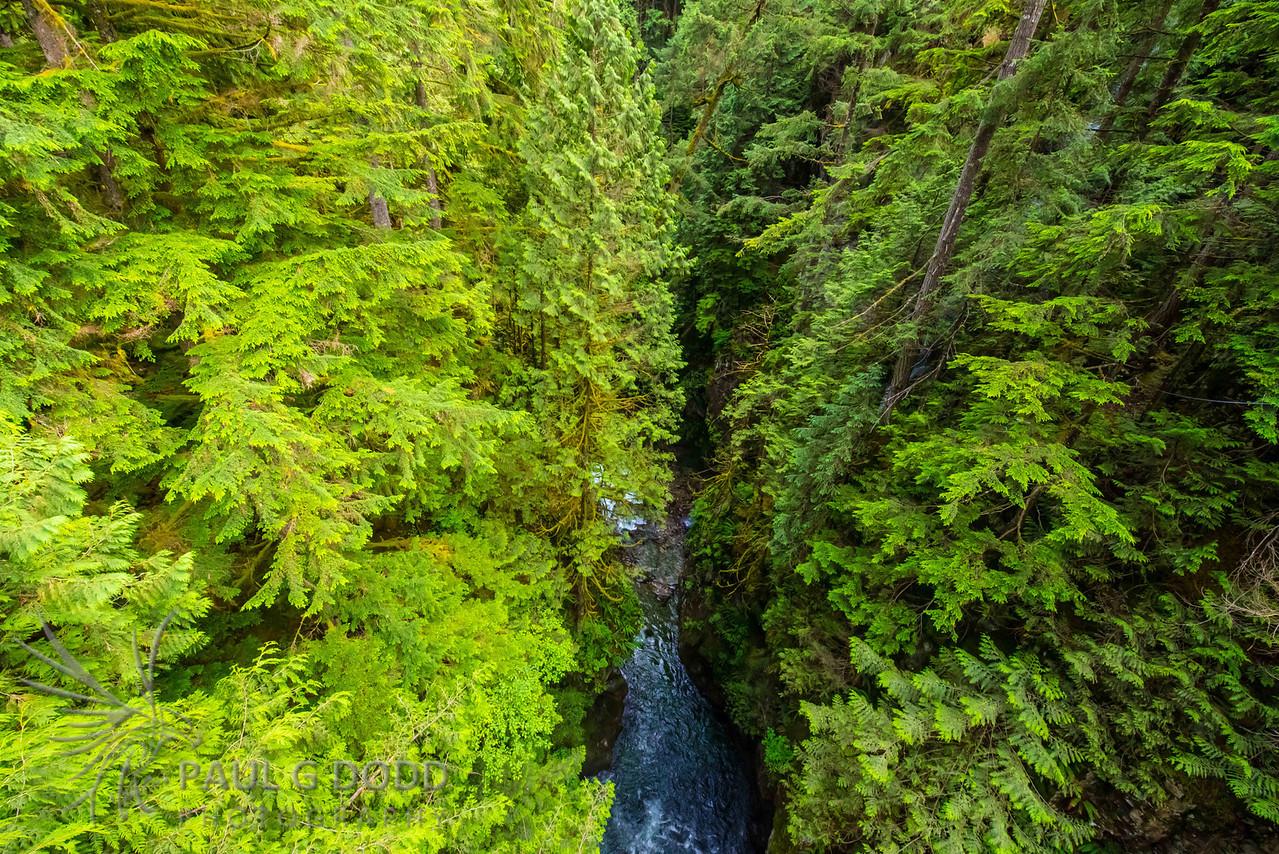 Lynn Canyon, Vancouver, British Columbia
