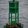 California Sealion (and Western Gull)