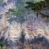 Point Lobos Natural Reserve
