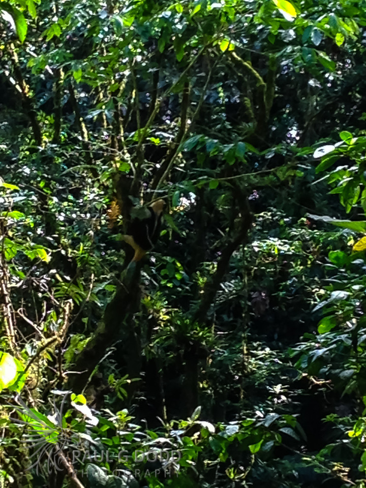 Rainforest trail at Arenal Observatory Lodge