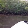 Sierpe River mangrove tour