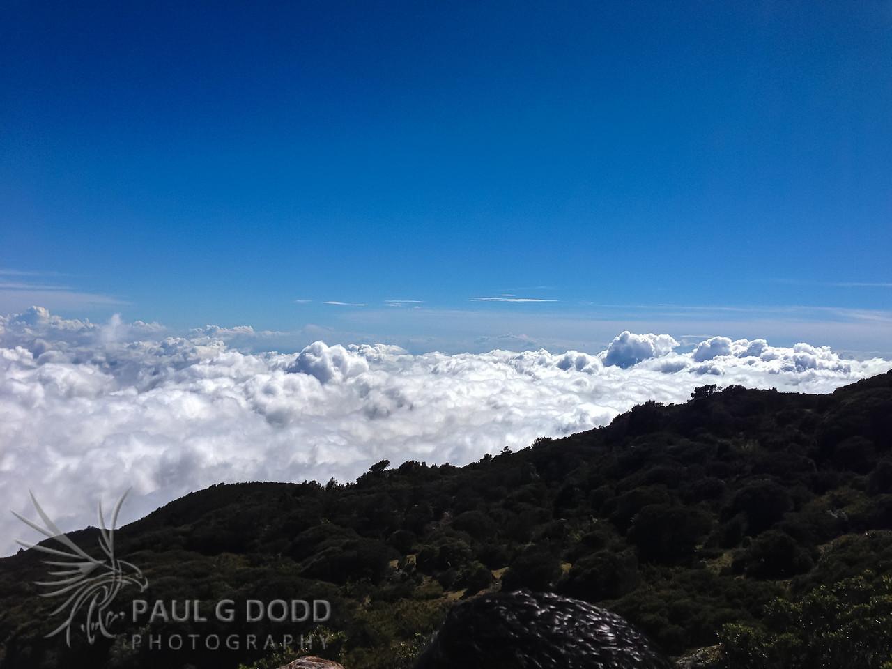 3200m atop Cerro de la Muerte, looking for the high-altitude species