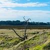Grassland, Tortoise Head