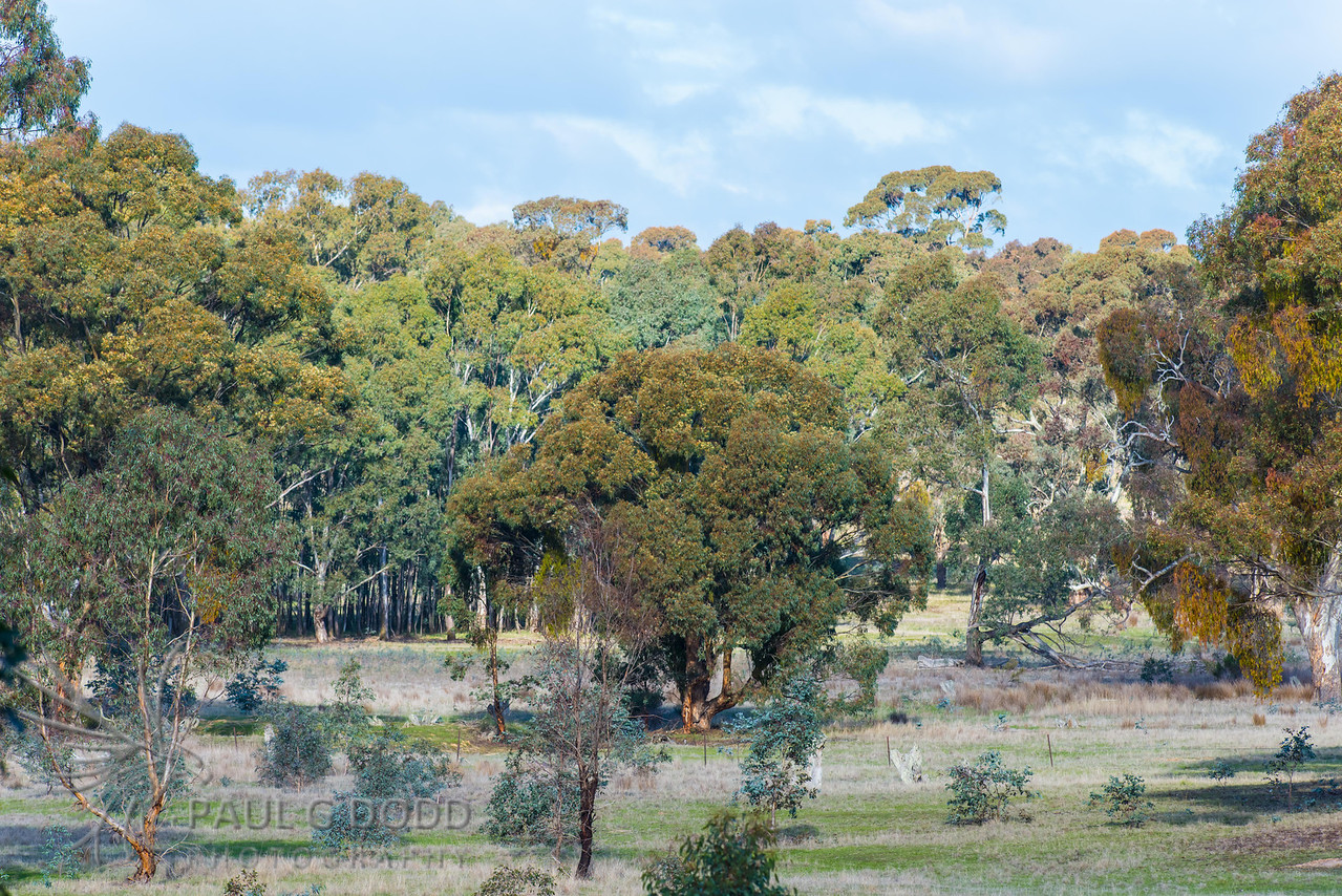 Dunach Nature Reserve, Clunes, Victoria