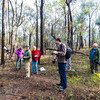 Regent Honeyeater Trackers (and others), Chiltern-Mt Pilot National Park, Chiltern, Victoria