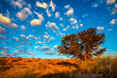 Sunrise at Kgalagadi