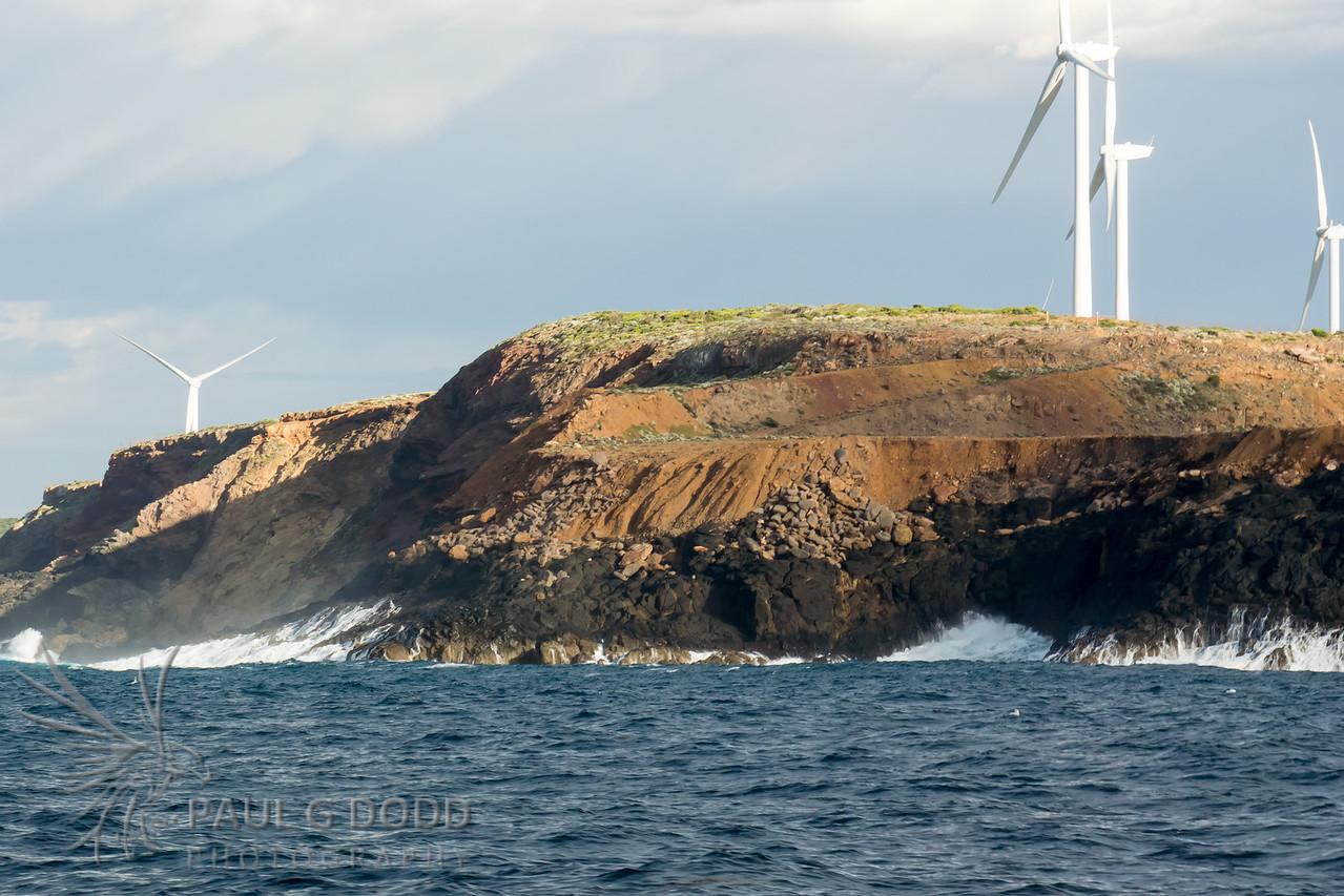 Point Danger Gannet Colony