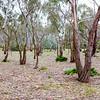 Open woodlands