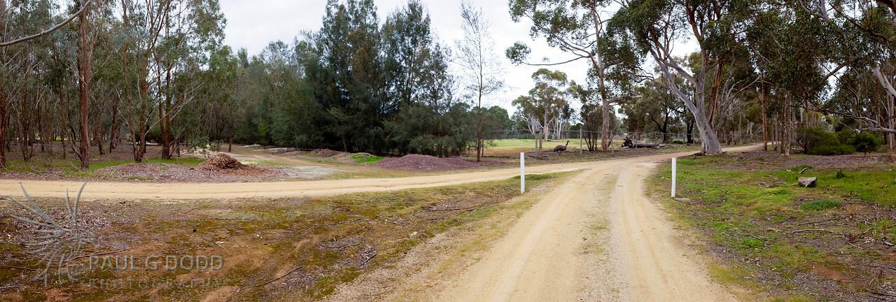 Loop road junction near Kangaroo Paddock
