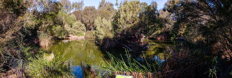 The Display Pond