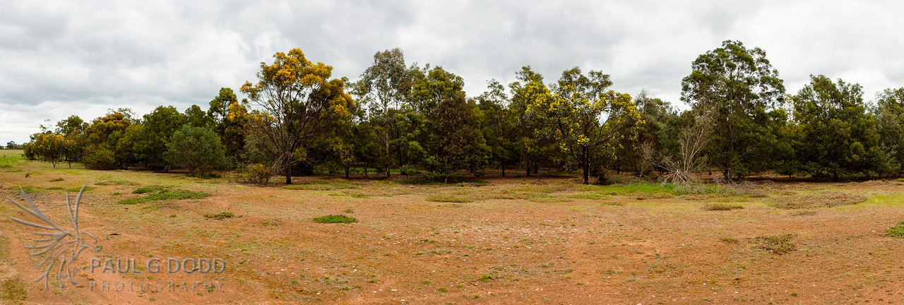 The older plantation