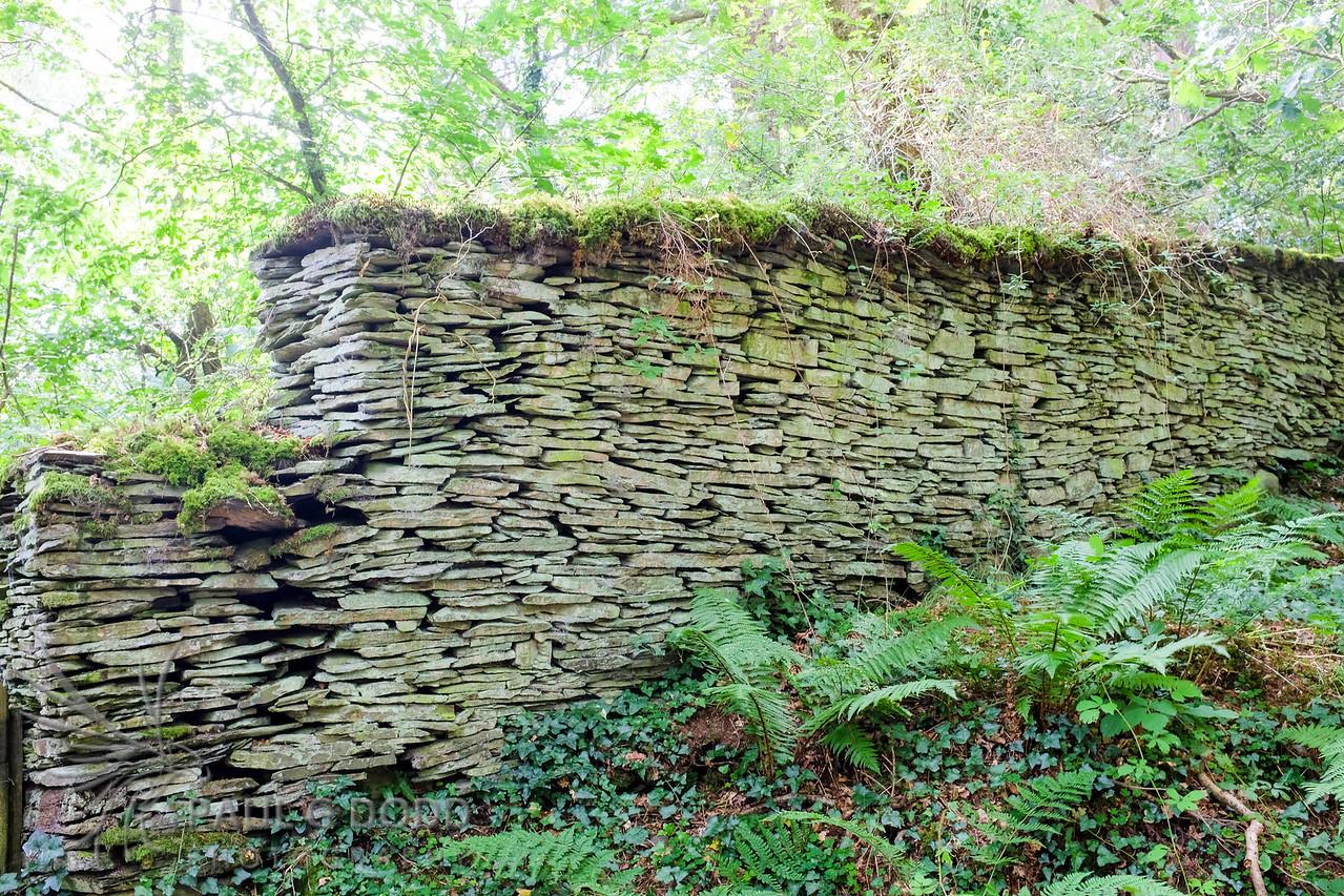 RSPB Ynys-hir, Ceredigion, Wales