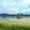Cattana Wetlands (Jabiru Pond)