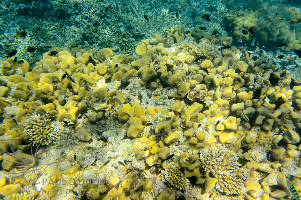 Snorkelling The Great Barrier Reef at Michaelmas Cay