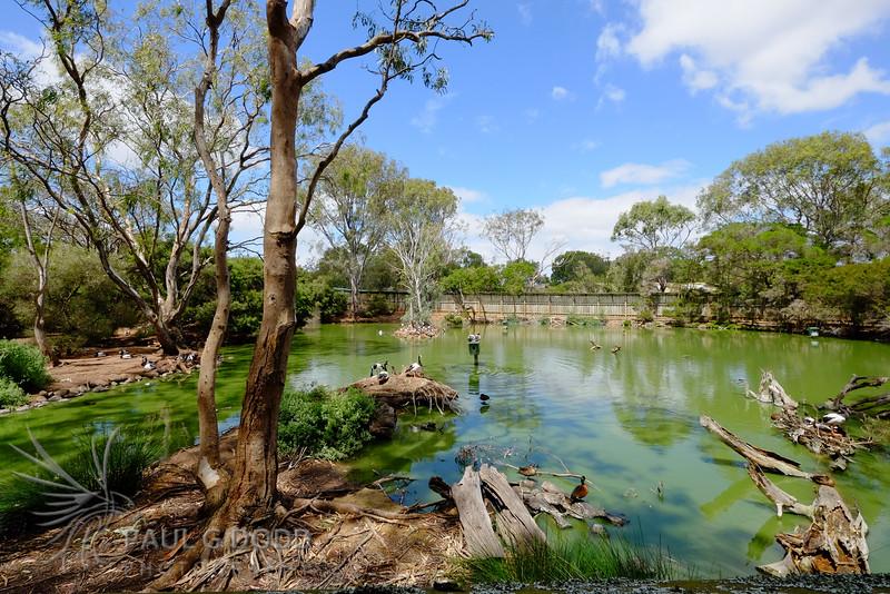 Billabong, Serendip Sanctuary