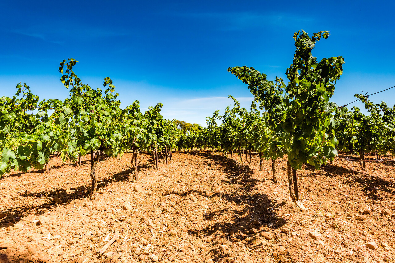 Pennyweight Winery, Beechworth