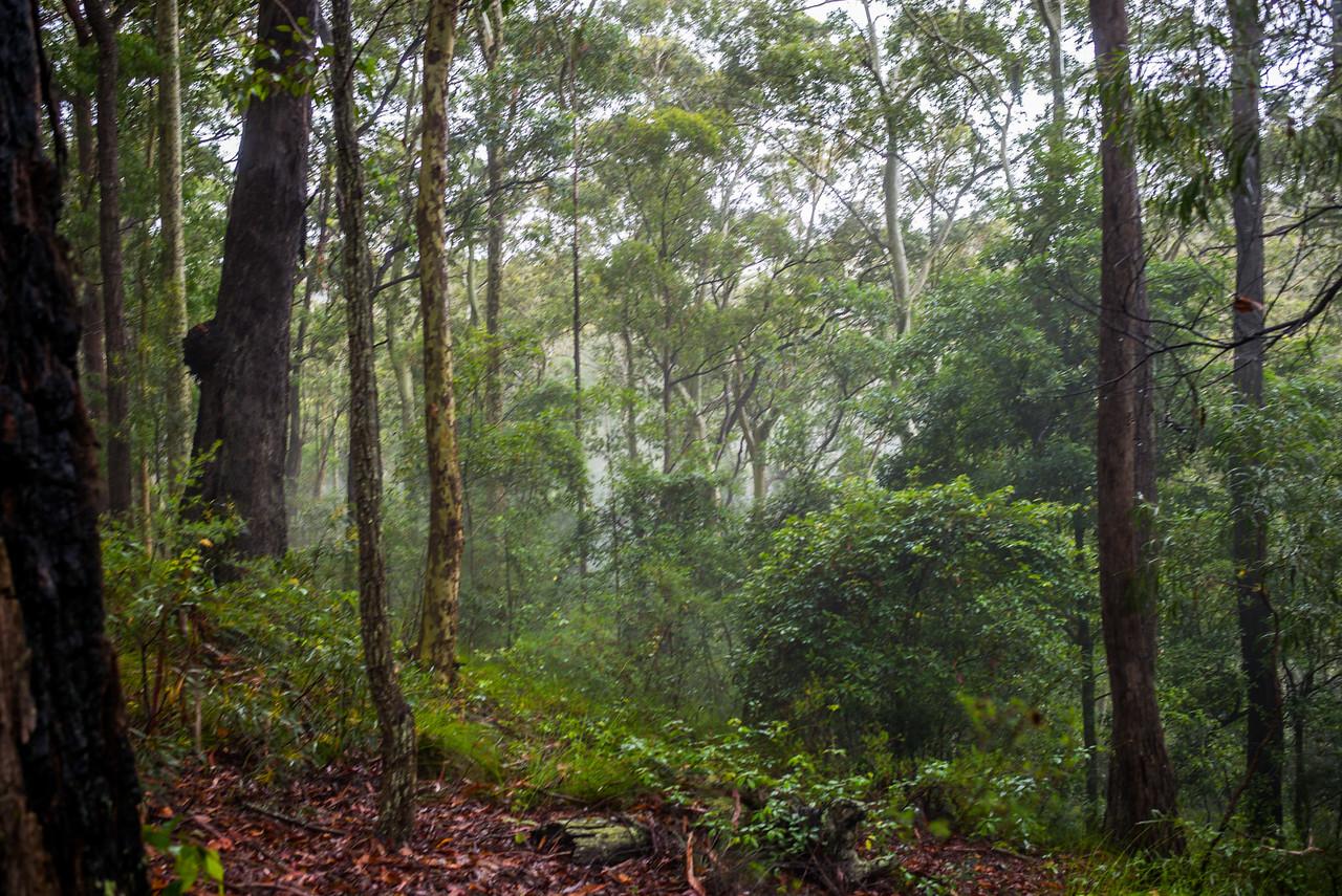 Kioloa State Forest