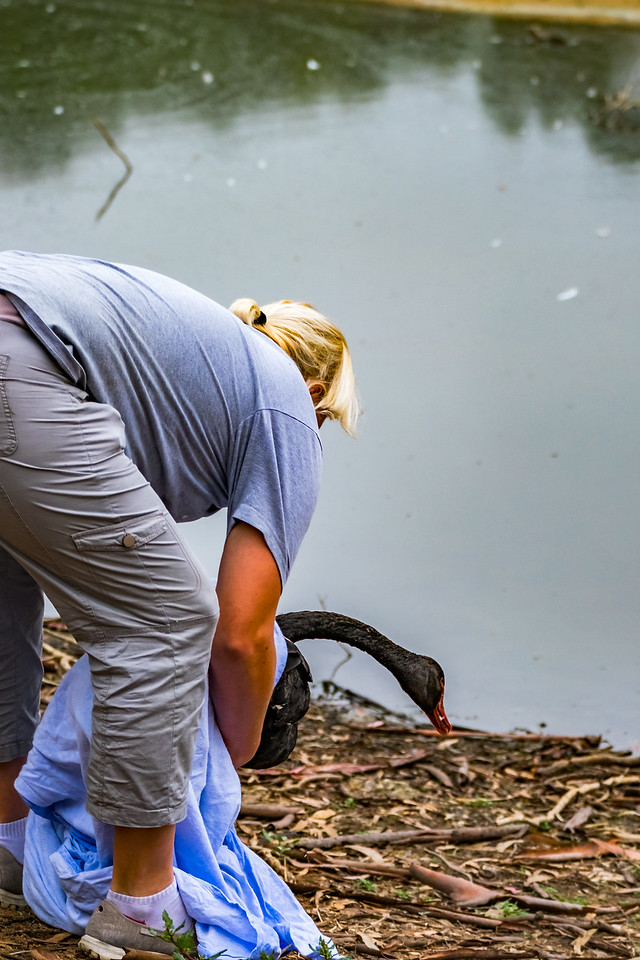Black Swan release
