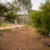 Freckled Duck Enclosure
