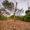 Dryland Aviary