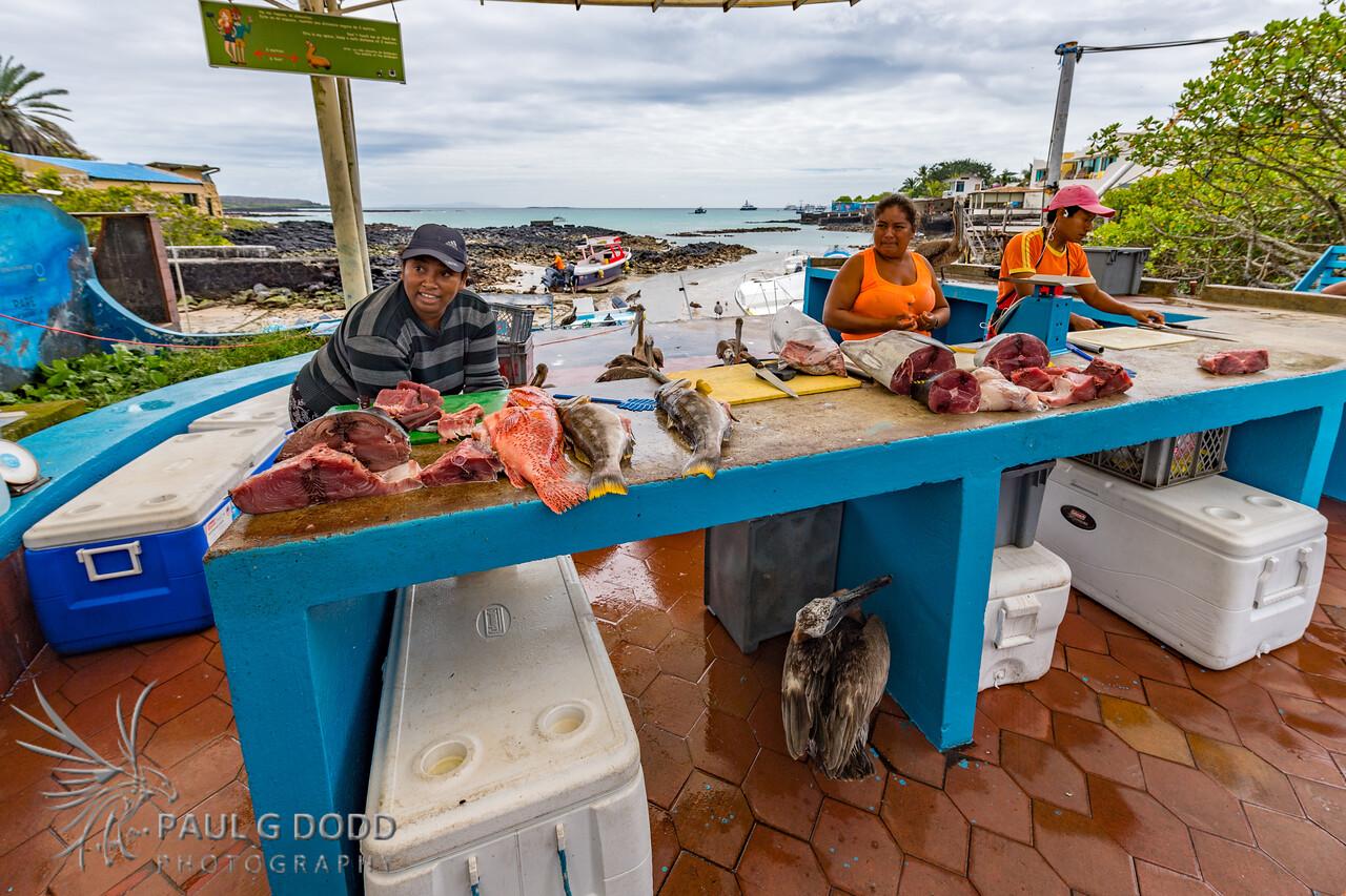 Fish Market, Puerto Ayora
