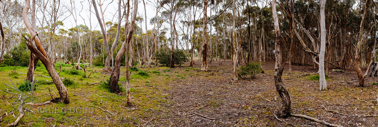 Dry woodlands near the Dam Wall