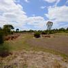 Farm Dam from road causeway, Serendip Sanctuary