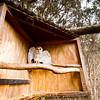Masked Owl Enclosure