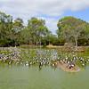 Marshland, Serendip Sanctuary